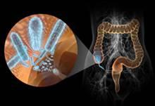 Функция микрофлоры кишечника